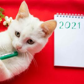 Cat with 2021 resolutions