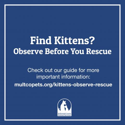 Find kittens guide 1