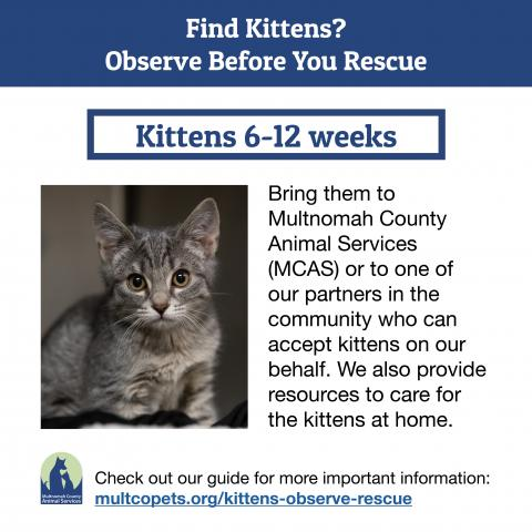 Find kittens guide 3 - 6 to 12 weeks