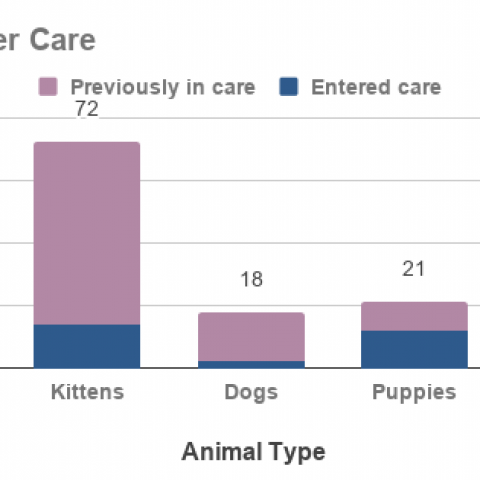 Graph - Animals in Foster Care